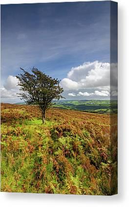North Devon Canvas Prints