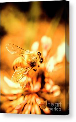Bees Natures Art Canvas Prints