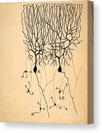 Brain Cell Canvas Prints