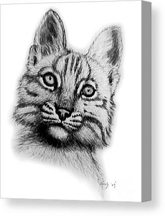 Bobcat Drawing Canvas Prints