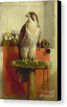 Falcon Canvas Prints