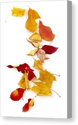 Designs Similar to Autumn Leaves