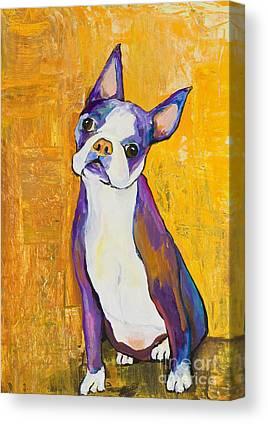 Boston Terrier Animals Acrylic Dog Portraits Pet Portraits Animal Portraits Canvas Prints