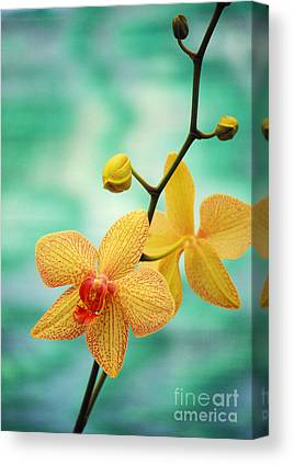 Orchids Canvas Prints