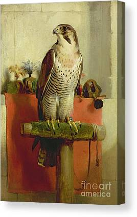 Falconry Canvas Prints