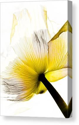 Horticultural Mixed Media Canvas Prints