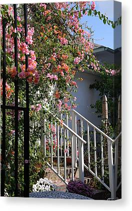 Roses Behind Fences Canvas Prints