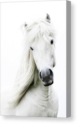 Background White Canvas Prints