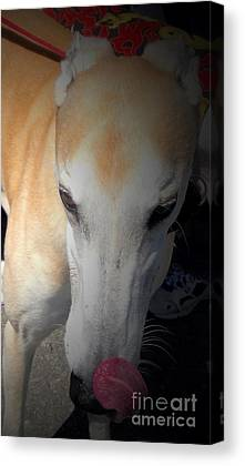 Rescued Greyhound Mixed Media Canvas Prints