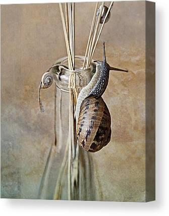 Insect Portrait Canvas Prints