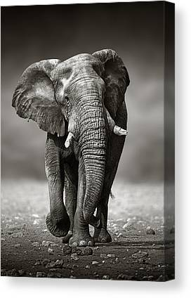 Elephant Photographs Canvas Prints
