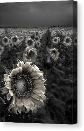 Mysterious Sun Canvas Prints