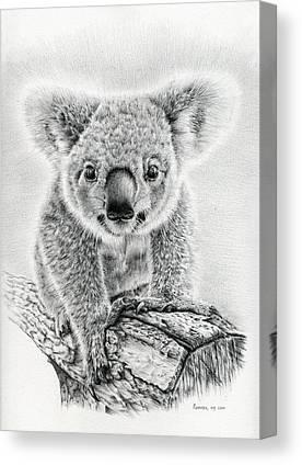 Koala Drawings Canvas Prints