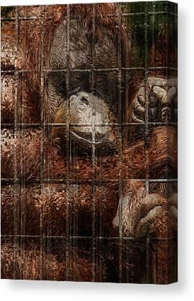Orangutan Digital Art Canvas Prints