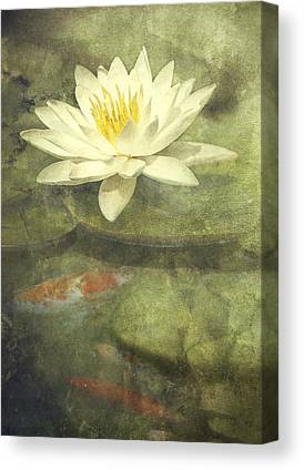 White Water Lily Canvas Prints