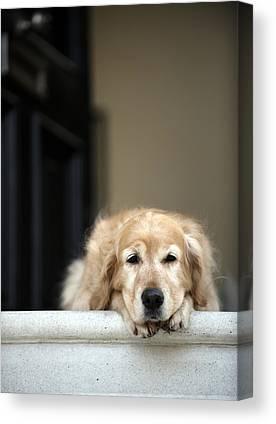 Dog On Front Steps Canvas Prints