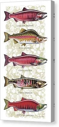 Salmon Canvas Prints