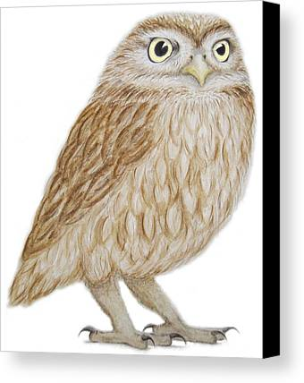 Designs Similar to Little Owl by Ele Grafton