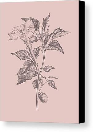 Designs Similar to Datura Blush Pink Flower