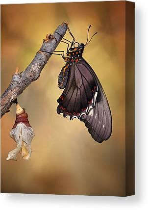 Swallowtail Canvas Prints