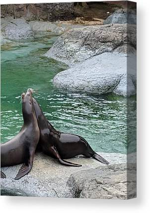 Seal Rock Canvas Prints