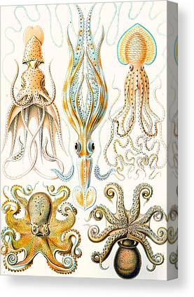Marine Life Drawings Canvas Prints