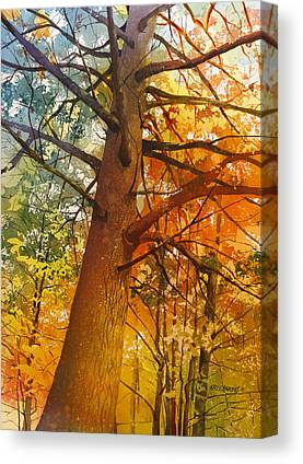 Old Growth Canvas Prints