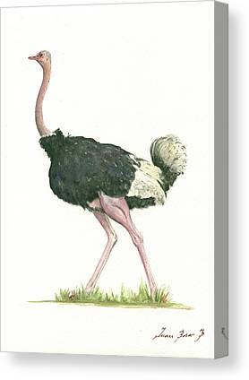 Ostrich Paintings Canvas Prints