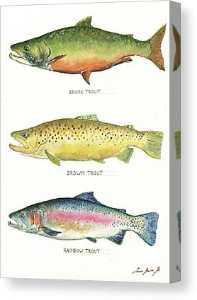 Trout Watercolor Canvas Prints