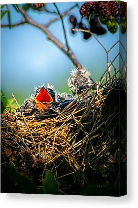 Hungry Chicks Canvas Prints