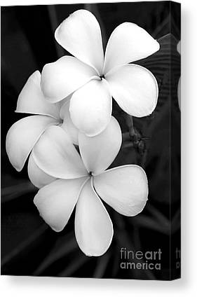 White Orchid Canvas Prints