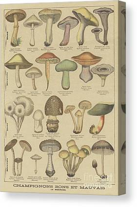 Shrooms Drawings Canvas Prints