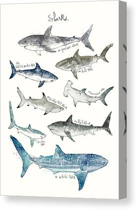 Tiger Sharks Canvas Prints