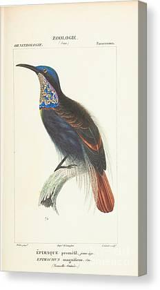 Guinee Canvas Prints