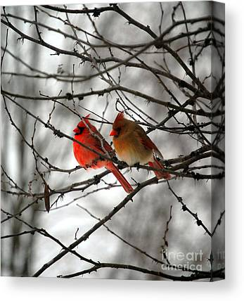 Roost Canvas Prints