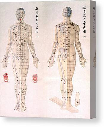 Traditional Chinese Medicine Canvas Prints