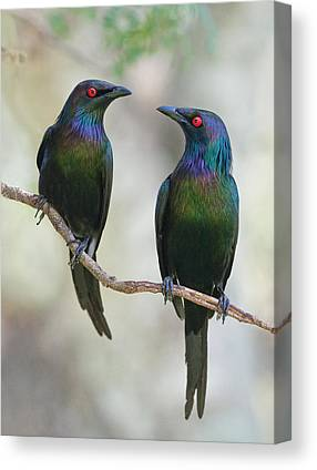 Starlings Canvas Prints