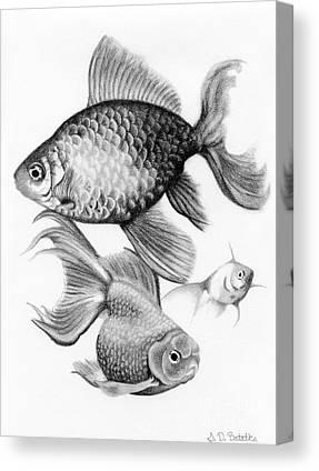 Aquatic Drawings Canvas Prints