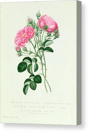 Sweet Briar Canvas Prints