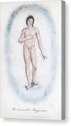 Macrocosm Canvas Prints