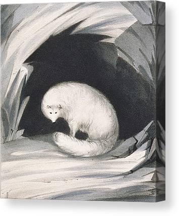 Bushy Tail Drawings Canvas Prints