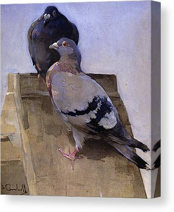 Pigeon Canvas Prints