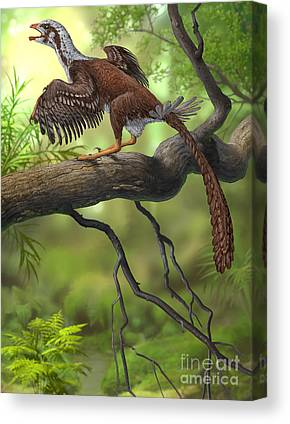 Caw Of The Wild Canvas Prints