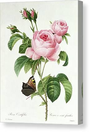 Pink Tulip Canvas Prints