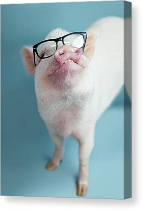 Pig Canvas Prints