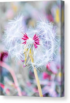 Perennials Canvas Prints