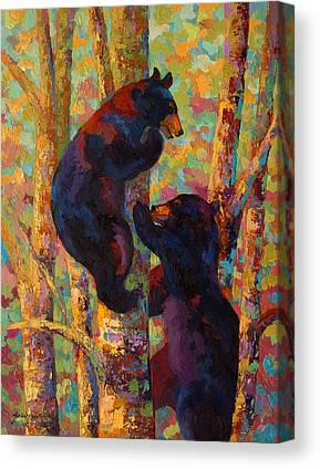 Black Bear Canvas Prints