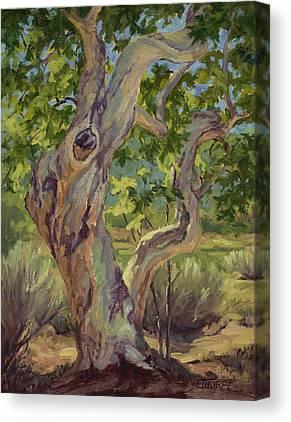 Sycamore Tree Canvas Prints