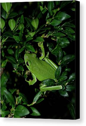 Frog Photographs Limited Time Promotions