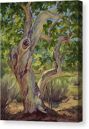 Tree. Sycamore Canvas Prints